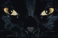 Halloween-blackcat
