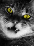 Blogcat3