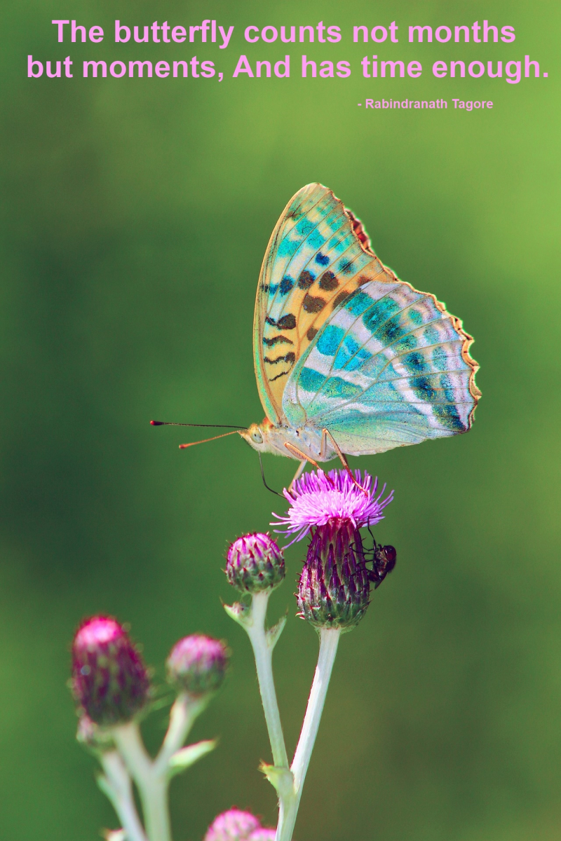 The butterfly counts not months but moments