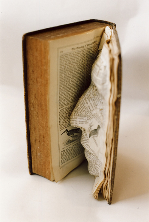 Book & Paper Art by the Unicorn Diaries
